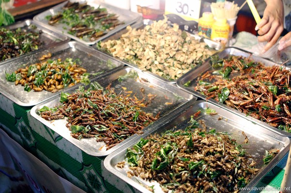 Spicy fried insects an excelent source of protein