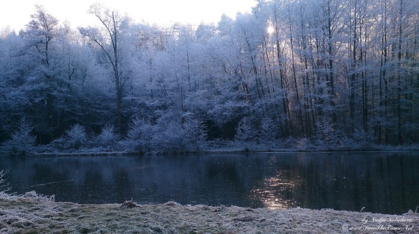 Winter_time_forest_lake, Czech Republic
